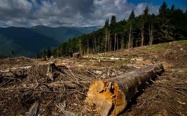 Зоя Темнохудова: «Збереження лісу потребує виваженої державної політики»